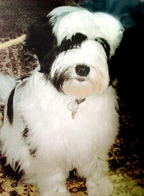 Abby (full puppy image)
