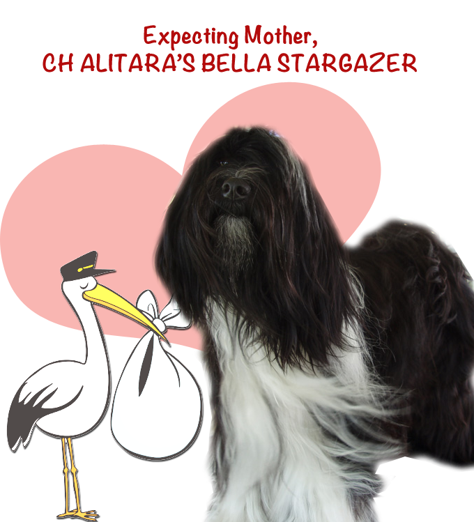 Bella Stargazer - Expecting Mother of 5 on June 24, 2016