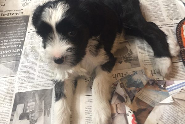 Featured Female- Haley @ 9 Weeks