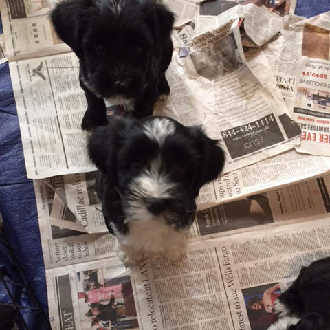 Bella Babies at 8 weeks