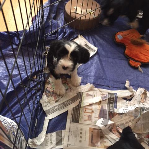 Bella Baby at 8 weeks