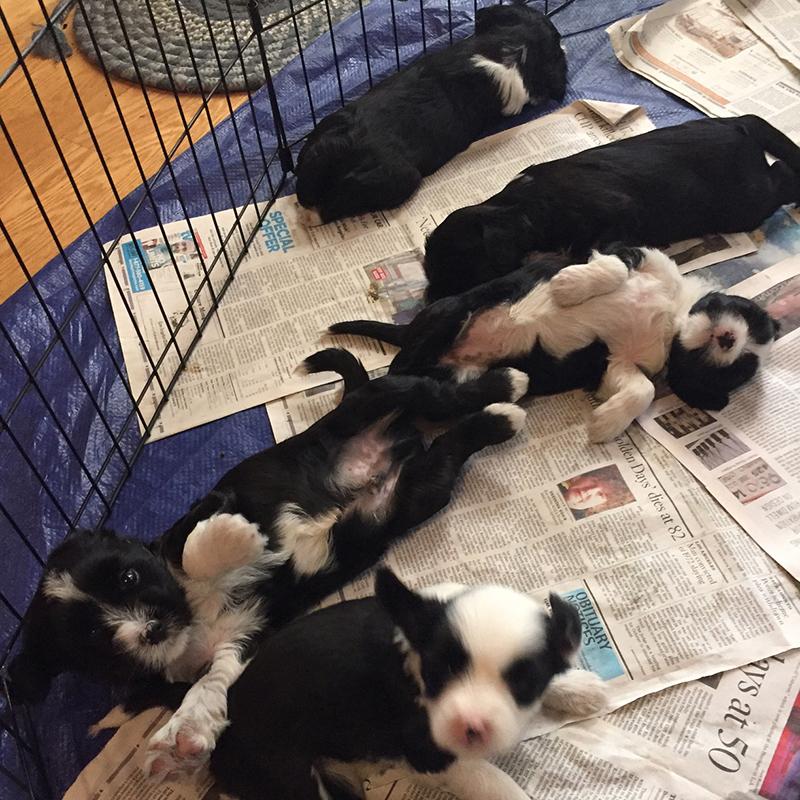 Pups @ 5 Weeks