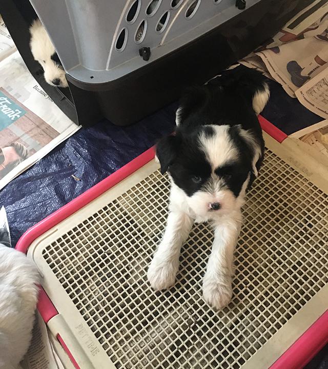 Lily (female) - 7 weeks old