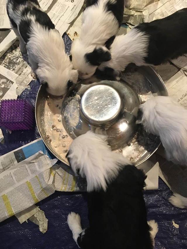 Growing Babies - 5-6 weeks Feeding