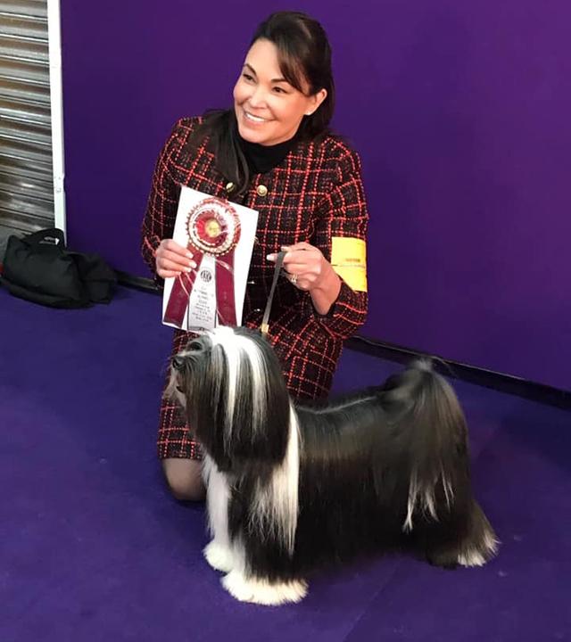 Stella (Bos Winner) Westminster 2020